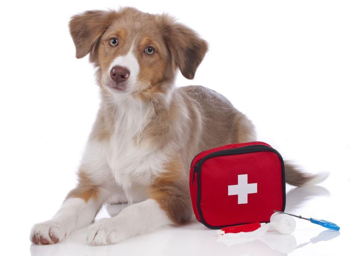 Pronto soccorso veterinario: come salvare la vita al proprio animale domestico