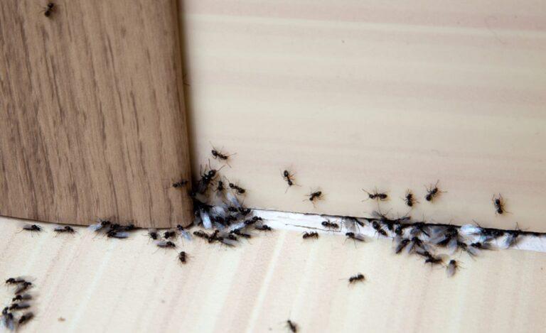 Come tenere lontani gli insetti dalla nostra abitazione