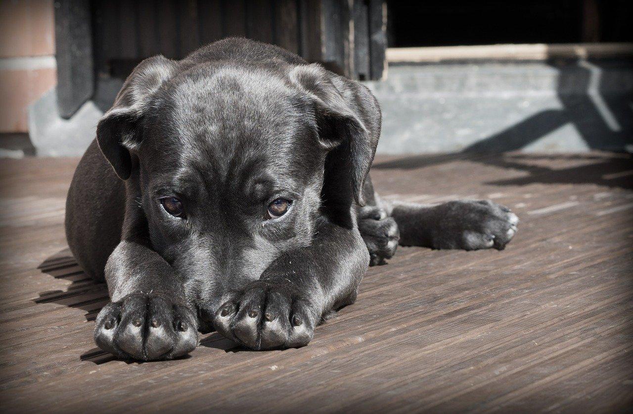 Curare il cane con rimedi naturali: i consigli degli esperti